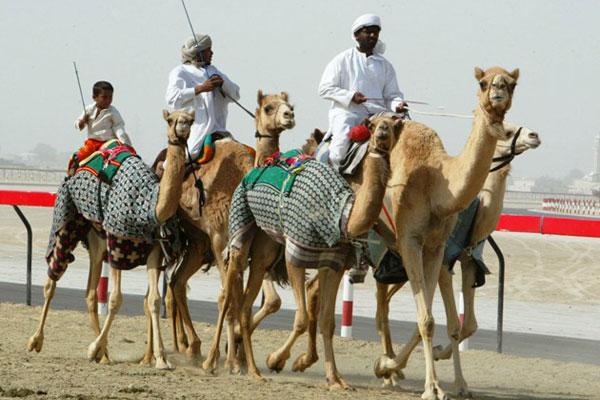 AlHamra Camel Активный отдых в Египте
