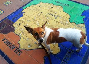 Удобство онлайн-поиска билетов и рекомендации по подготовке поездки с домашним животным