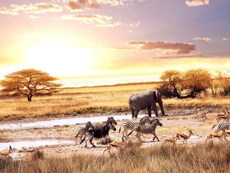 Удивительная Африка